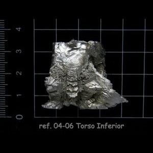 04-06 2-3 Torso Inferior