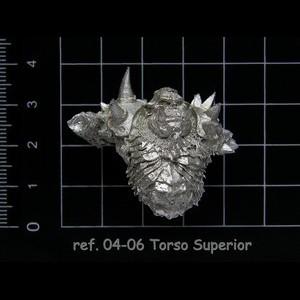04-06 3-3 Torso Superior