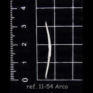 11-54 7-7 Arco